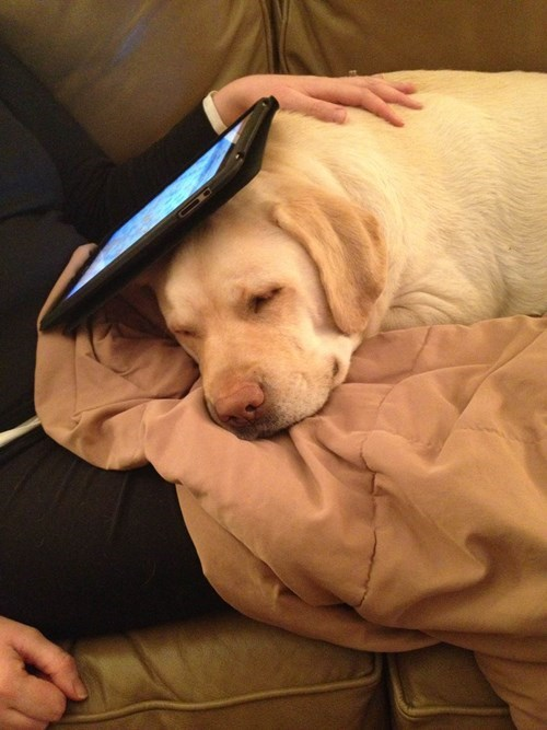 cute dogs ipad friends napping - 8180418816