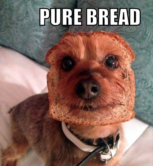 dogs,puns,breed,bread