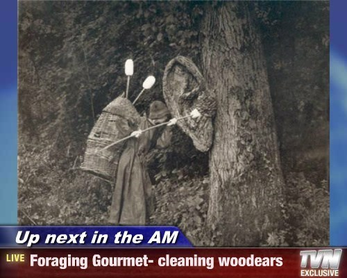 Up next in the AM - Foraging Gourmet- cleaning woodears