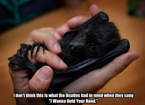 beatles,bats,lyrics,Music
