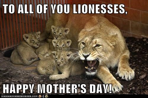 mothers day,cubs,lions