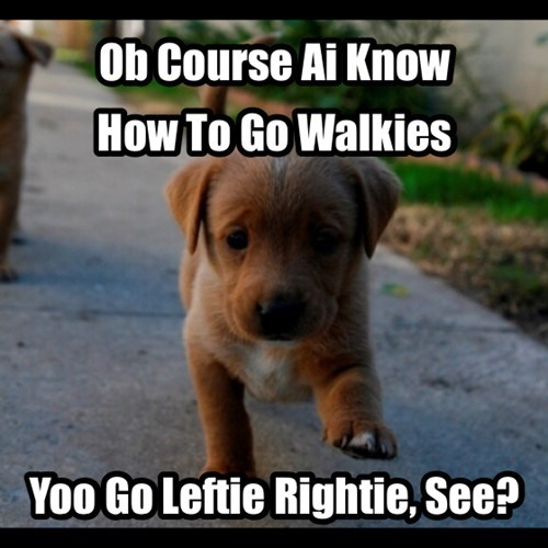 cute,dogs,learning,puppies,walking