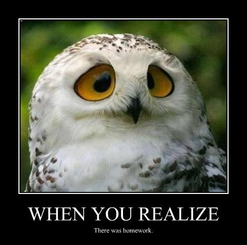 homework puns owls - 8182424832