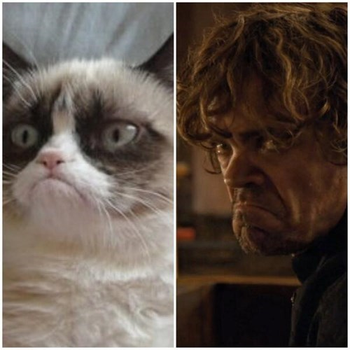 Grumpy Cat Game of Thrones totally looks like season 4 tyrion lannister - 8183060224