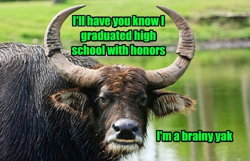 I'll have you know I graduated high school with honors I'm a brainy yak