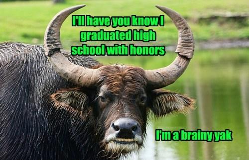 funny puns school yaks - 8183612672