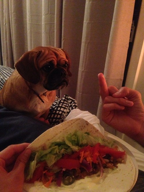 food dogs pets tacos - 8183657984