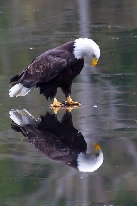 eagles - 8183708928