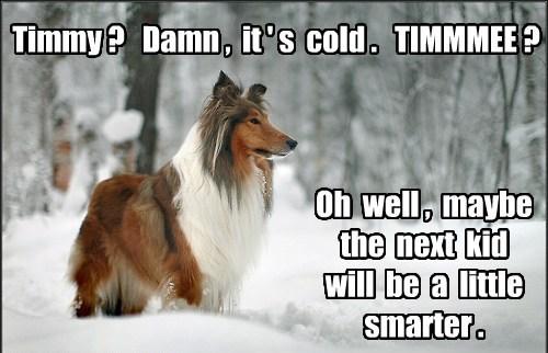 cold funny lassie winter - 8183754496