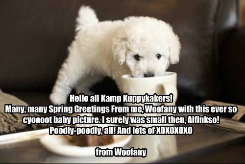 Hello all Kamp Kuppykakers! Many, many Spring Greetings From me, Woofany with this ever so cyoooot baby picture. I surely was small then, Aifinkso! Poodly-poodly, all! And lots of XOXOXOXO from Woofany