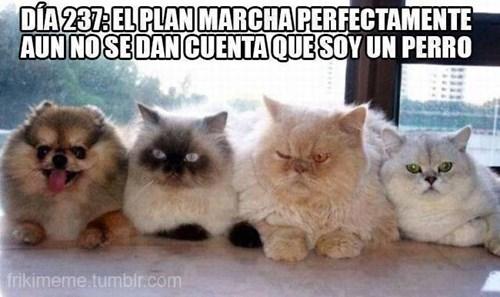 Memes animales gatos perros bromas - 8183865600