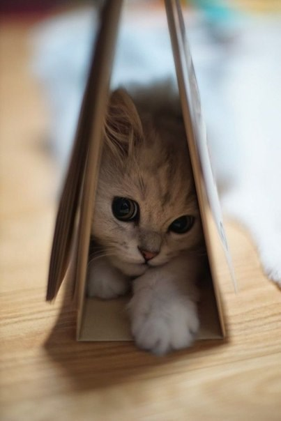 kitten cute love Cats - 8183977216