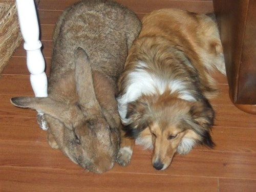 dogs optical illusion funny rabbits