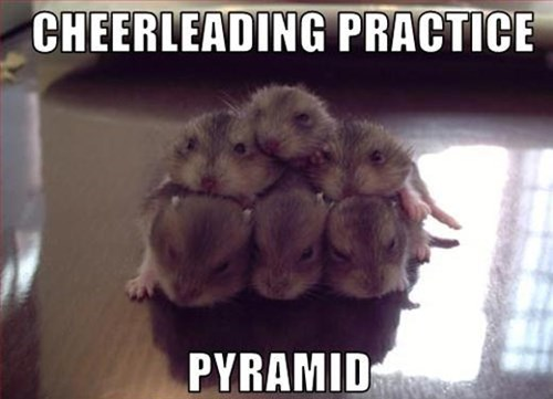cute,cheerleaders,hamsters
