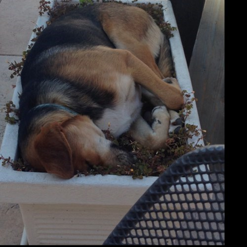 dogs cute flower bed literal sleeping - 8184626176