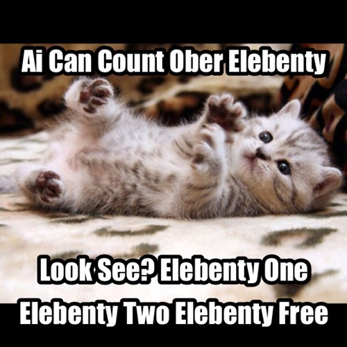 kitten clever cute counting