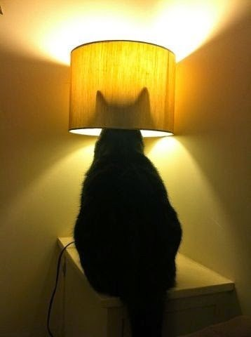 lamps batman Cats funny - 8185064192