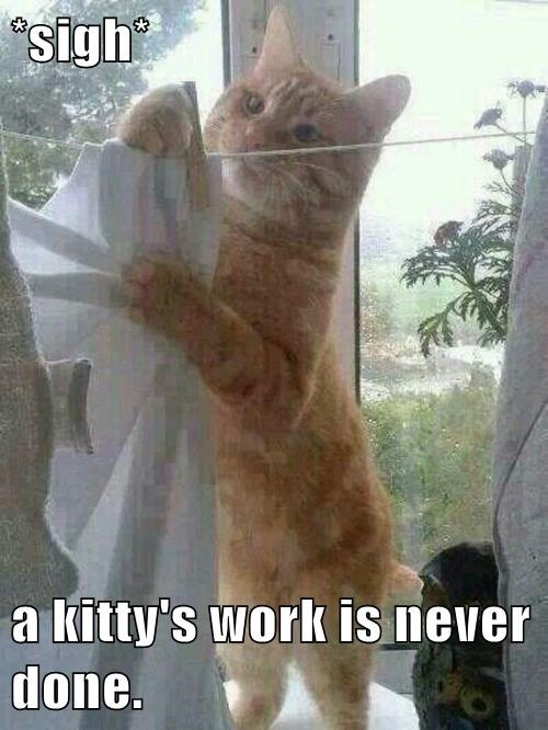 laundry housework Cats funny - 8185067776