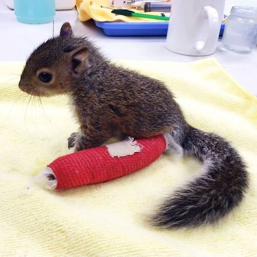 ouch,Babies,cast,squirrel,cute