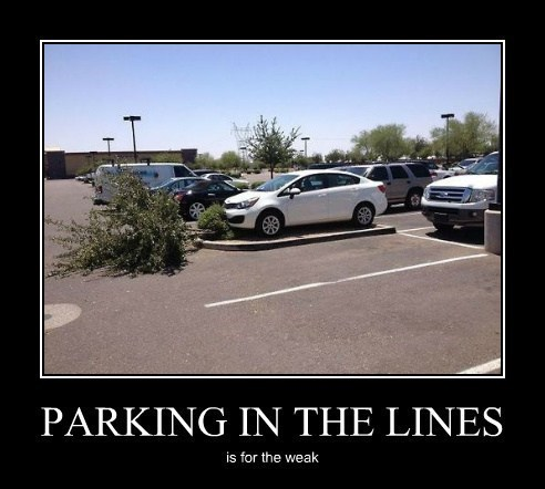 trees douchebags idiots funny parking - 8185185792