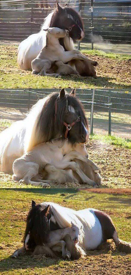 Babies nap snuggle horses - 8185212672