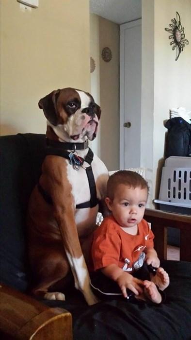 dogs babysitting dating - 8185222656