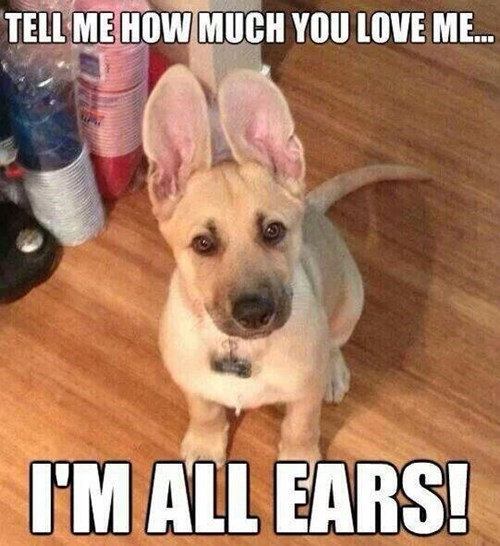 dogs bears puns listening cute - 8185250560