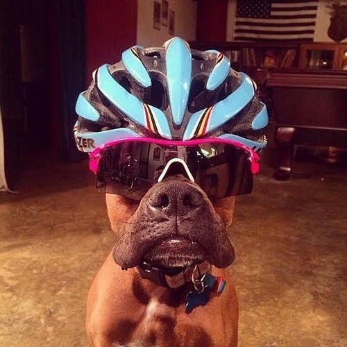 dogs helmet cute bikes - 8185284352