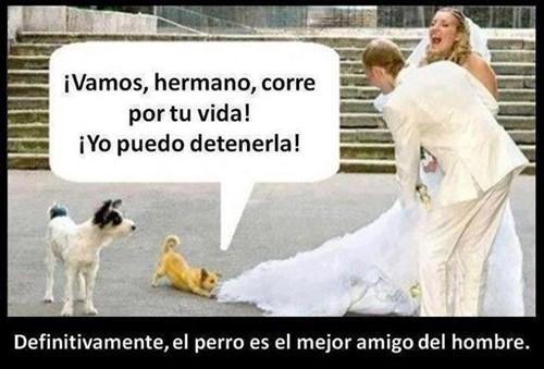 bromas perros Memes animales - 8185350400