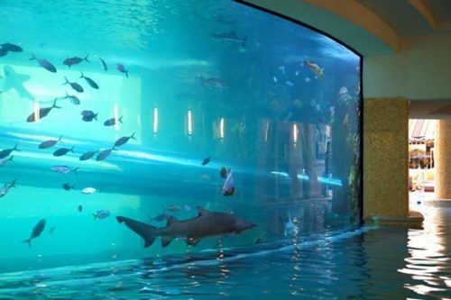 design aquarium pool - 8185355776