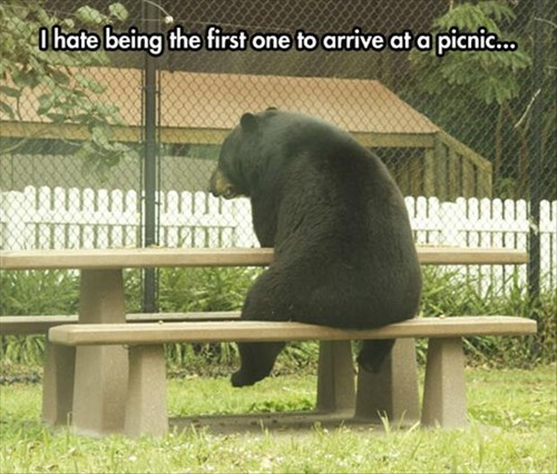 picnic bears lonely - 8185370112
