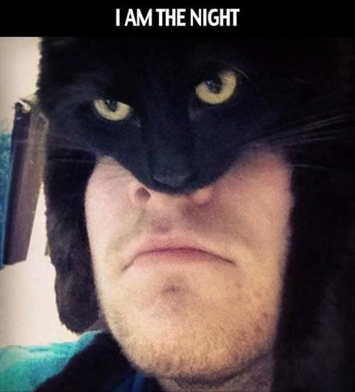Funny cat picture of someone wearing their kitty as a hat to look like Batman