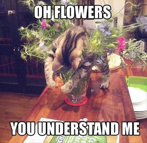napping flowers Cats funny - 8185386752
