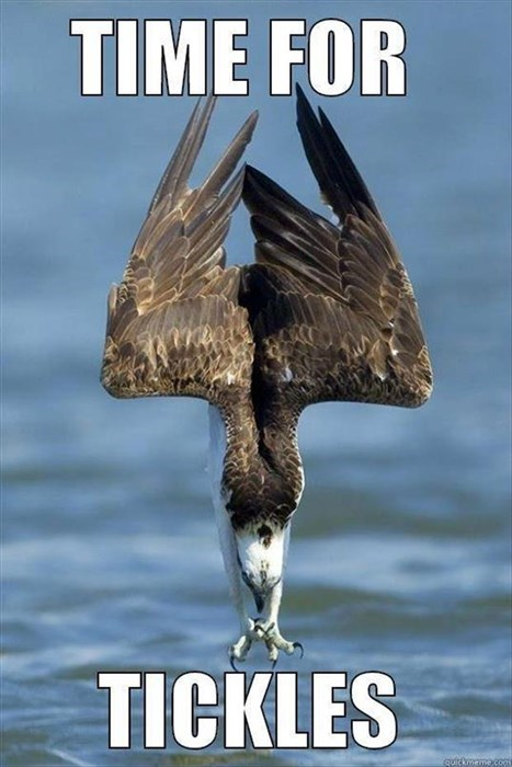 eagles fish tickle - 8185398528