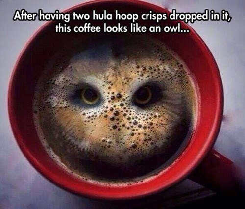 coincidence,coffee,owls