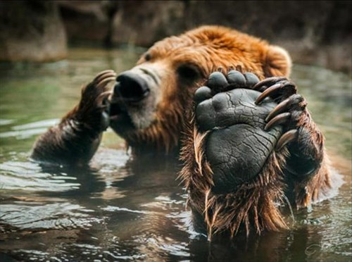 cute,bears,baths,feet