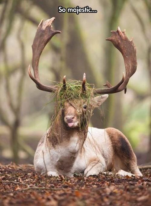 animals deer - 8185496320