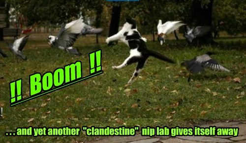 "!! Boom !! . . . and yet another ""clandestine"" nip lab gives itself away"