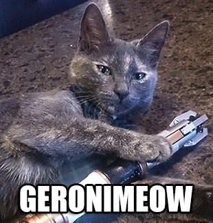 Cats,geronimo,regeneration