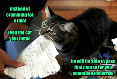 homework noms Cats funny - 8186172160
