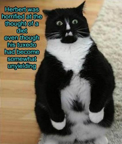 diet tuxedo fat Cats - 8186243072