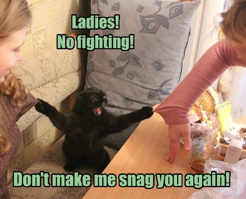 fighting,Cats,funny