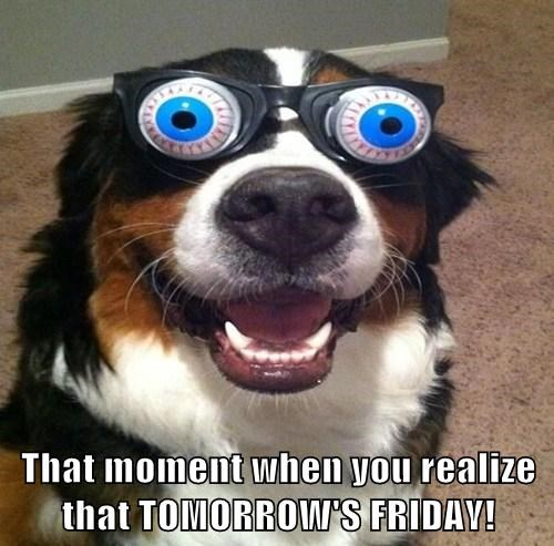 dogs,cute,fridays,weekend