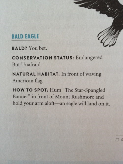 bald eagles - 8186365696