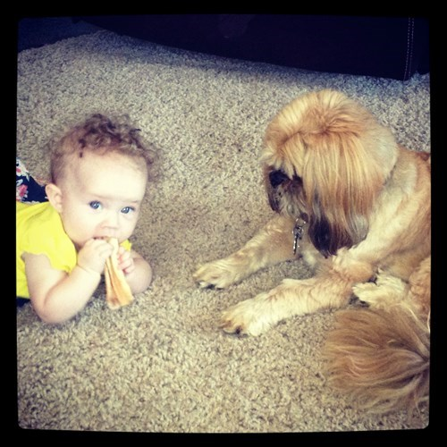 Babies,dogs,sharing,begging,funny