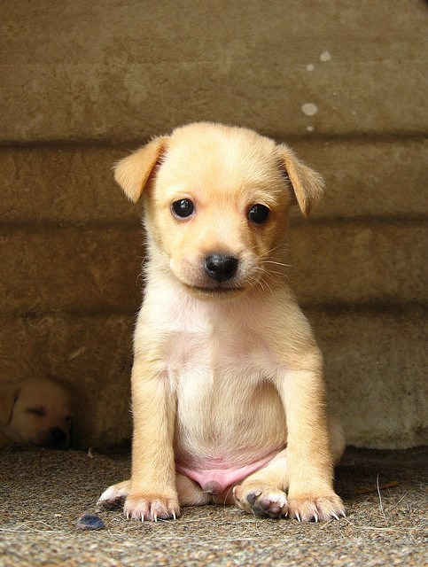 puppies eyes squee - 8186518528