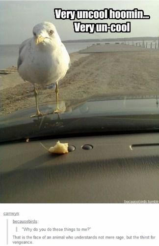poop tease birds seagulls food
