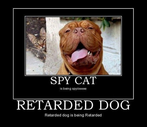 dogs idiots Cats funny - 8186528000