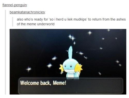 mudkip,Pokémon,tumblr,Memes