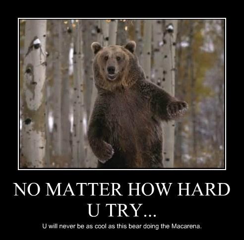 bears,dancing,funny,Macarena